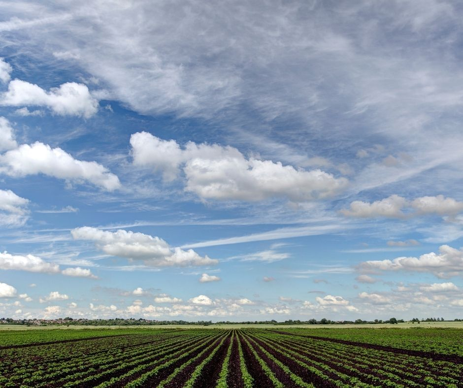 Farming Investment Fund agricultural grants UK